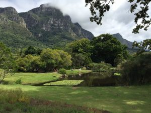 Kirstenbosch national botanical gardens. 35km from Protea Retreat